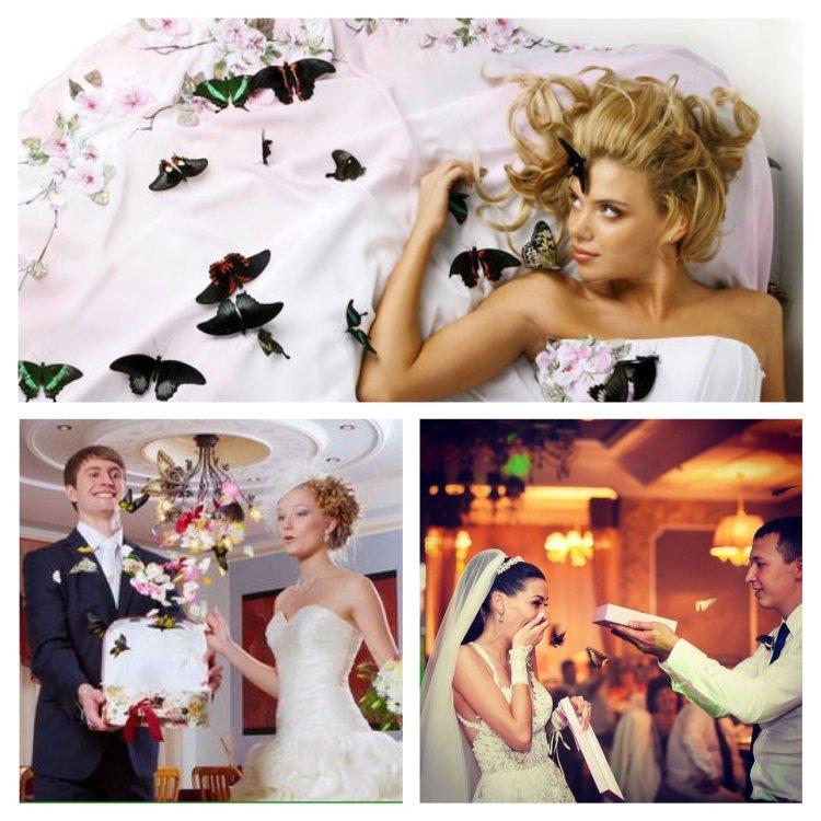 Живые бабочки на свадьбу недорого